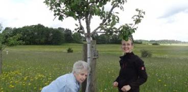Erfahrungsbericht zum Birnenprachtkäfer