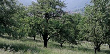 Kulturlandschaft und Artenschutz